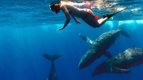 GoPro: Whale Fantasia | Pacifico Production | Scoop.it