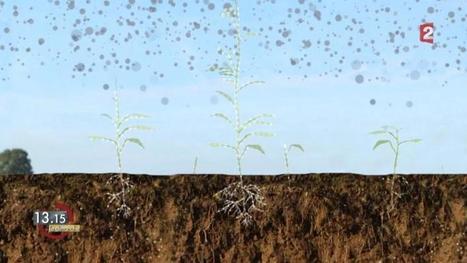13h15 le dimanche. Soigneurs de terres | Veille Scientifique Agroalimentaire - Agronomie | Scoop.it