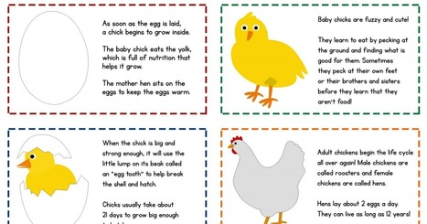 chickenlifecycle_cards.pdf | Plants | Scoop.it