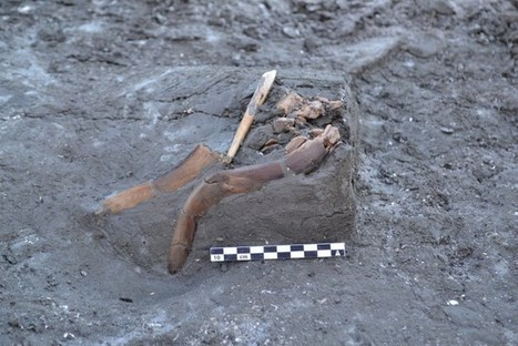 Intact Leister spear proves the point | Archaeology News | Scoop.it