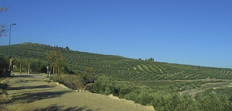 El laboreo mínimo es la técnica de mantenimiento del suelo más utilizada en olivar | Wine & Olive Oil Strategy & Sustainability | Scoop.it