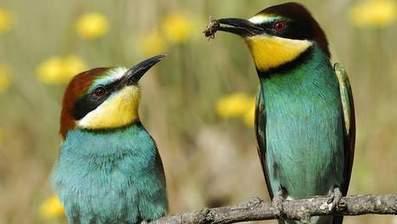 L'inventaire annuel des oiseaux devient mondial | Les oiseaux au gré du vent