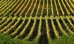The day of the champagne environmentalist has arrived | Andrew Simms | In The Glass Wine and Spirits News | Scoop.it