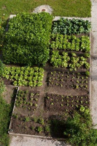 Небольшой огород для начинающих | | Огородные новости | Scoop.it
