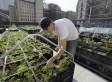 Can Urban Farming Go Corporate? | Vertical Farm - Food Factory | Scoop.it