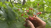 Beer makers take a nature walk for ingredients - kgw.com | Beer Sips | Scoop.it