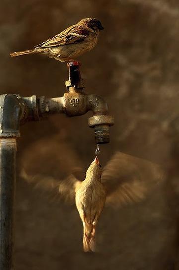 ALLPE Medio Ambiente Blog Medioambiente.org : Sincronía perfecta | Agua | Scoop.it