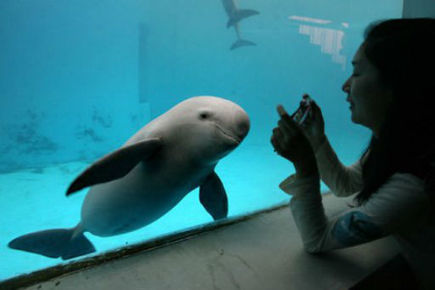Desperate bid to save Yangtze river dolphin | Dolphins | Scoop.it