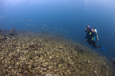 Typhoon damage on reefs in the Philippines | Coral Conservation | Scoop.it