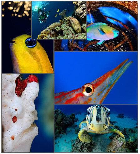 Underwater Photography World Championship 2014 | Blue world news | Scoop.it
