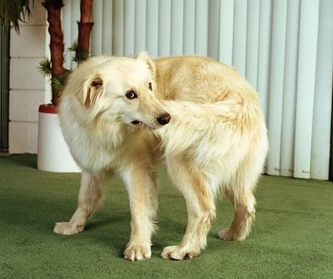 Dog DNA probed for clues to human psychiatric ills   Genetics - GEG Tech top picks   Scoop.it