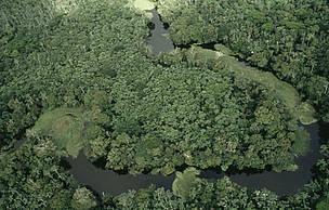 Florestas seguem carentes de mais proteção | Desenvolvimento Sustentavel | Scoop.it
