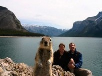 How Banff Squirrel turned from Internet meme to tourism ambassador | The Brand Strategist for Hotels | Scoop.it