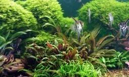 Acuarios Biotopo : TiendAnimal | Acuarios | Scoop.it