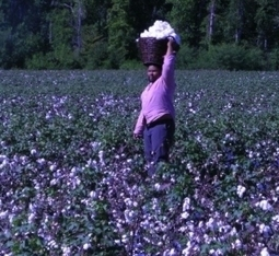 Southern discomfort: Tracing a region's history through its food | Sustainable Futures | Scoop.it