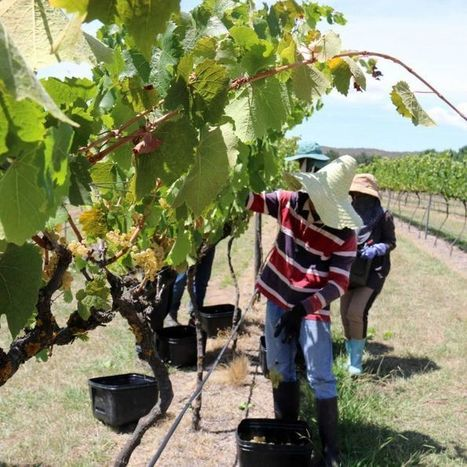 AUSTRALIA: Winemakers record 'exceptional season' with early harvest | Vitabella Wine Daily Gossip | Scoop.it