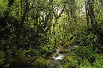 Mengenali Peranan Hutan Bagi Kehidupan   Pemanasan Global   Scoop.it