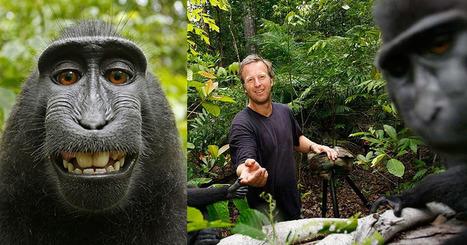PETA's Lawsuit Over a Monkey Selfie Copyright is Now Even More Bizarre   Profession Photographe   Scoop.it