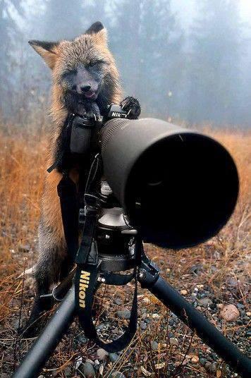 Animal Photo   Photography   Scoop.it