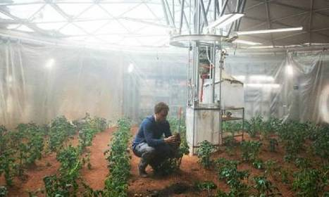 Scientists grow sweet potatoes and strawberries in | CALS in the News | Scoop.it
