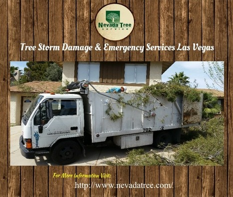 Tree Storm Damage and Emergency Services | Tree Care Services | Scoop.it