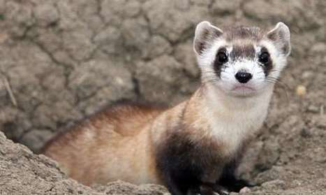 Close to Extinction: 35 Critically Endangered Animals | Natural History, Science, & Green Technology | Scoop.it