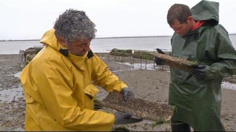 Le journal de 13h - Escale sur le bassin d'Arcachon : la naissance des huîtres | Tourisme sur le Bassin d'Arcachon | Scoop.it