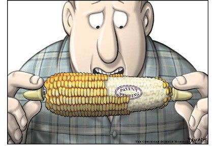 The Corbett Report: Five GMO Myths Busted | Absolute Organic: toxic free living! | Scoop.it