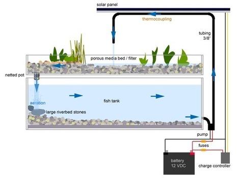 An Alternative To Conventional Farming: Aquaponics | Aquaponics~Aquaculture~Fish~Food | Scoop.it