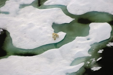 #Polarbears on #thin #ice | Rescue our Ocean's & it's species from Man's Pollution! | Scoop.it