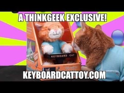 The Keyboard Cat Toy Is OUT NOW!!! | Funny Viral Videos | Scoop.it
