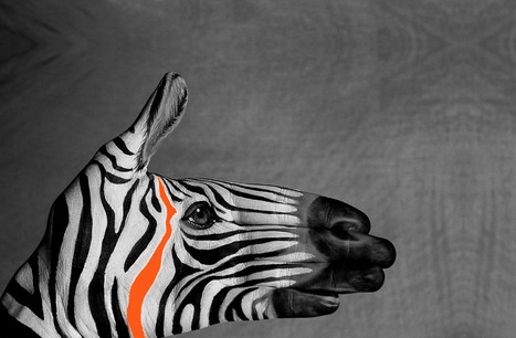 Credential of Zebra Strategies | Marketing Research Company New York | Scoop.it