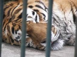 Improve Zoo Animal Welfare | GarryRogers NatCon News | Scoop.it