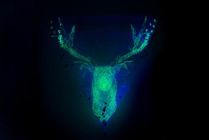deer | CRAW | Scoop.it