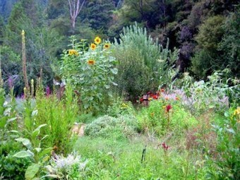 The Harmony ofPermaculture   Permaculture Digest   Scoop.it