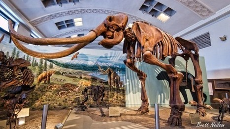 Woolly Mammoth Fossils Raise Red Flags on the Road to Extinction - KQED (blog)   Agua   Scoop.it