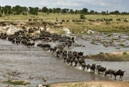 Serengeti National Park Tour, Wildlife Sanctuary Tanzania, Gyan Expedition | Gyantz.com: Camping Safaris Tanzania | Scoop.it