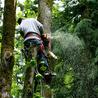 Hunnicutt Tree Service