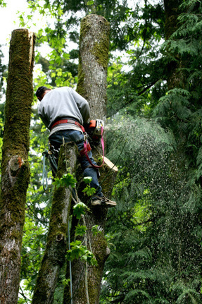 For quality lawn care, contact Hunnicutt Tree Service from Fair Play, SC | Hunnicutt Tree Service | Scoop.it