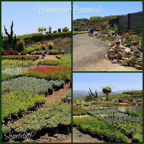 Sweetstuff's Sassy Succulents: Succulent Celebration Was Fantastic | Natural Soil Nutrients | Scoop.it