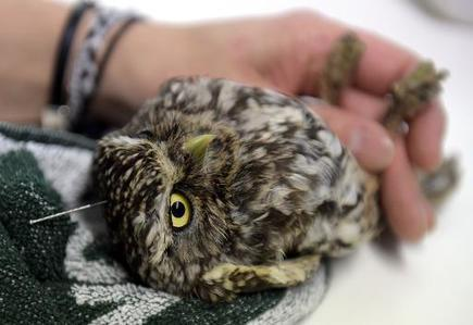 A Madrid, l'acupuncture pour soigner des rapaces - Magazine GoodPlanet Info | animals rights and protection | Scoop.it