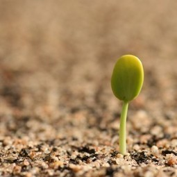 FreshFruitPortal.com | U.S. seed group urges caution over industry mergers | Fruits & légumes à l'international | Scoop.it