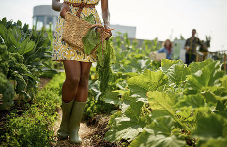 Delhaize vendra les légumes produits sur le toit d'un de ses magasins de Bruxelles | Jardins urbains | Scoop.it