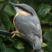 localheroblog | Birds | Scoop.it