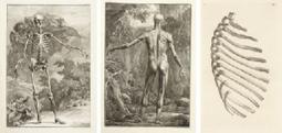 El proyecto Albinus: una fascinante interpretación táctil del atlas anatómico de Albinus | Humanidades digitales | Scoop.it