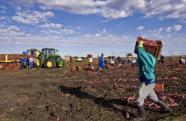 Afrique du Sud: la ministre de l'Agriculture pour exproprier les fermiers blancs   Actualités Afrique   Scoop.it