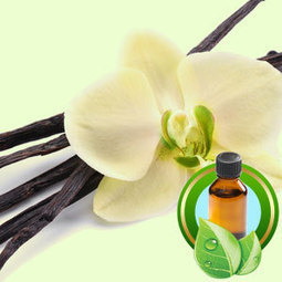 Natural Vanilla Infusion (35 FOLD) | Essential-Oils | Scoop.it