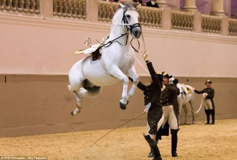 The amazing flying Lipizzaner stallions leap into the air at spectacular annual fundraising gala | special events | Scoop.it