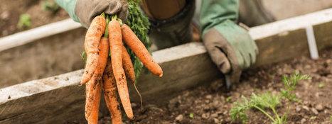 Gardens that Give – Community Gardens make an impact! | jardins partagés | Scoop.it