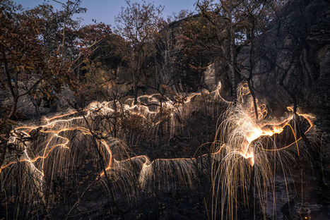 Photographer Uses Fireworks and Long Exposures to Make Trees Drip Light | Fotografía | Scoop.it